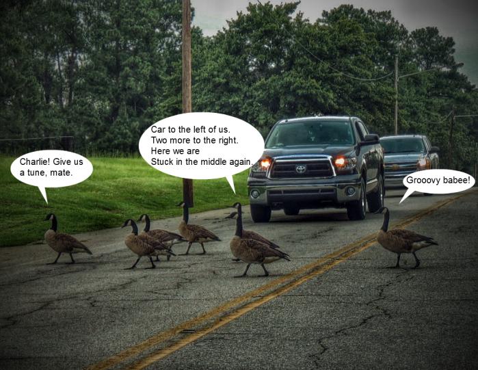 Secretly recorded geese-speak