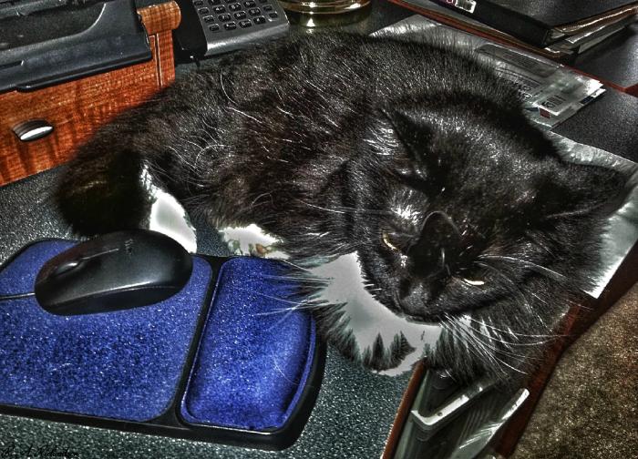 Loki Found the Mouse